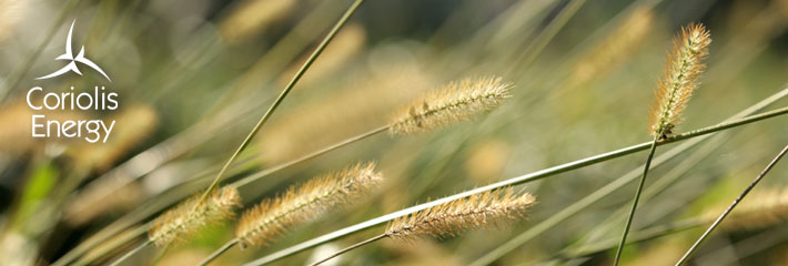Image:  Close-up of grass blowing in wind